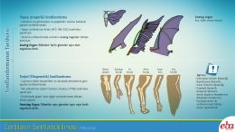 Bu infografikte canlıların sınıflandırılmasının tarihçesi anlatılmaktadır.