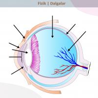 Gözün Yapısı ve Fotoğraf Makinesi - 1