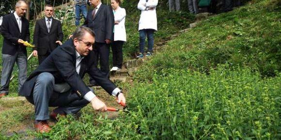 Stevia üretimi başladı