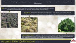 Dünya'daki bitki çeşitlerinden Çalı Formasyonu tanıtılmıştır.