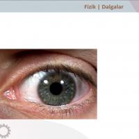 Gözün Yapısı ve Fotoğraf Makinesi - 2
