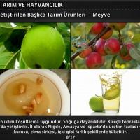 Türkiye'de Yetiştirilen Başlıca Tarım Ürünleri - 2