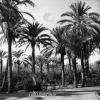 Antalya, Hurma Ağacı, 1977