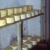 Kars, Kaşar peyniri yapımı