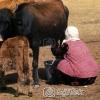 Ağrı Hayvancılık