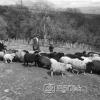 Köy Okulları Öğrencileri, 1953