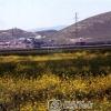 Ağrı Köy