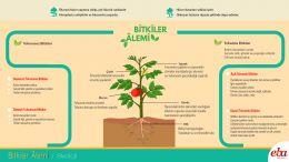 Bitkiler Âleminin genel özellikleri anlatılmaktadır.