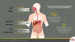 Mekanik ve Kimyasal Sindirim çeşitlerini ve ayrıca bu tip sindirimlerin hangi organlarda   nasıl gerçekleştiği anlatılmaktadır.