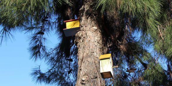 Beykoz Halide Edip İlkokulu Kuş Evi projesi