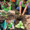 Okulumuzda Organik Tarım Yapıyoruz!
