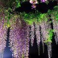 KARADENİZ `in çiçekleri