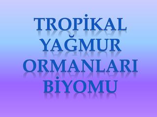 TROPİKAL YAĞMUR ORMANLARI BİYOMU