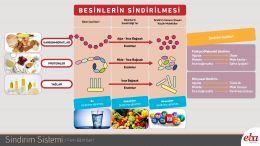 Besinlerin sindirildiği yerler,besin içerikleri ve sindirim şekillerini anlatan çalışma