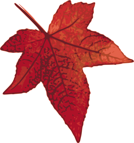 Kırmızı Akçaağaç Yaprağı, Red Maple Leaf