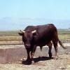 Muş, Devlet Üretme Çiftliği, 1978