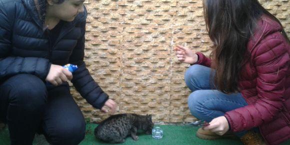 Giresun'daki sokak hayvanları yalnız değil