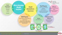 Küçük moleküllerin hücre zarından taşınma yolları anlatılmaktadır.