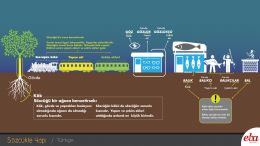 Ek-kök ilişkisini,  gövdeyi, yapım eki-çekim eki ayrımını görsel olarak kavratmak için hazırlanmış Türkçe dersi infografiği.