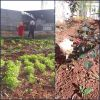 Nizip Zübeyde Hanım Anaokulu çevre dostu bahçem