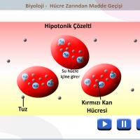 Hücre Zarından Madde Geçişleri - 1