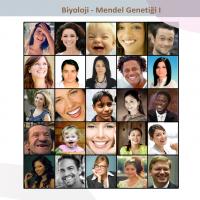 Mendel Genetiği - 2