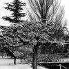 Ankara AOÇ Kış