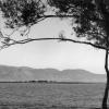 Burdur Gölü, 1951