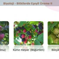 Bitkilerde Eşeyli Üreme - 4