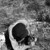 Zeytin fidanının dikilmesi, 1951