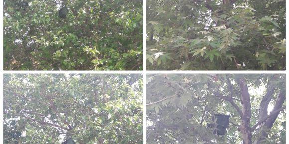 Kuş evleri ağaçlarımızda