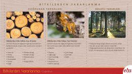 Bitkilerin doğrudan ve dolaylı faydaları anlatılmıştır.