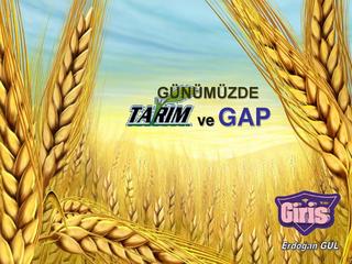 Günümüzde Tarım ve GAP