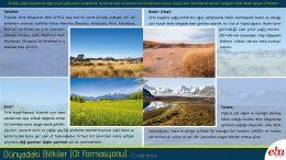 Dünya'daki bitki çeşitlerinden olan Ot Formasyonu tanıtılmıştır.
