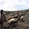 Çobanlar