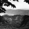 Rize ve çaylıklar, 1952