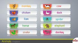 Bu infografikte 2.sınıf Animals teması ele alınmıştır.