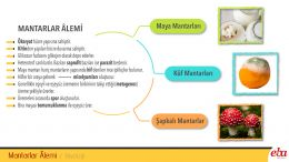 Mantar âleminin genel özellikleri ve üyeleri anlatılmaktadır.