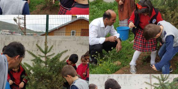 Yesil  Bayburt için  ağacı  sev, doğayı  koru