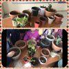 Bitki yetiştiriciliği ve bakımı