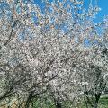 sonbaharda çiçekler ekim ayı