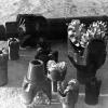 Petrol arama çalışmalarında kullanılan malzemeler, 1964