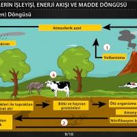 Ekosistemlerin İşleyişi, Enerji Akışı ve Madde Döngüsü - 3 / Oksijen - Azot Döngüsü