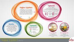 Bu infografikte yağlar; trigliseritler, fosfolipitler ve steroitler başlıklarında anlatılmaktadır.