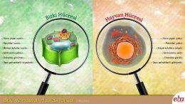 Bitki ve hayvan hücresinin farkları anlatılmaktadır.