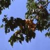 Kayısı Ağaçları