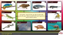 Yakın çevresindeki hayvanları tanır, beslenme ve barınma alışkanlıklarını gözler.