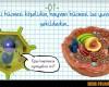 Bitki ve Hayvan Hücresi Arasındaki Farklar