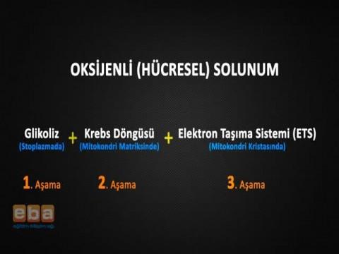 Elektron Taşıma Sistemi (ETS)